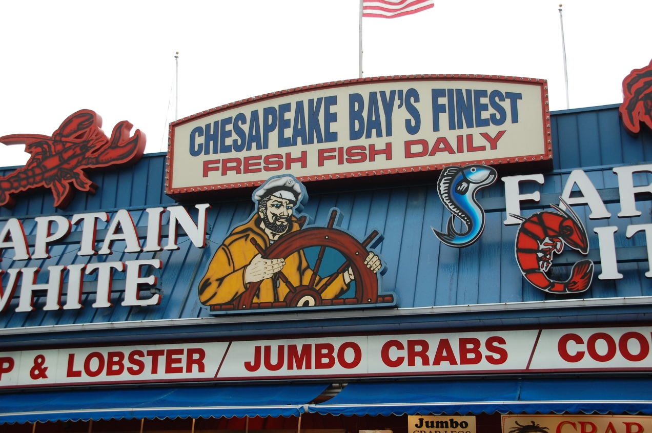 The Chesapeake's Finest