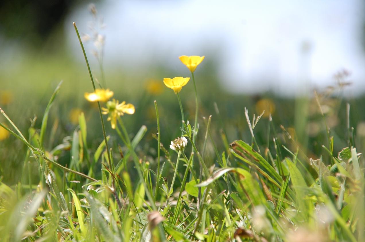 Pretty Little Yellows