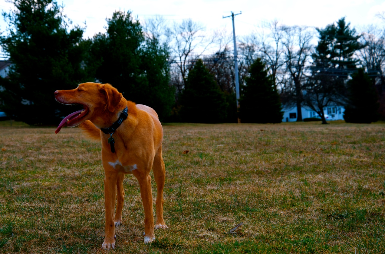 Dog Days of Spring