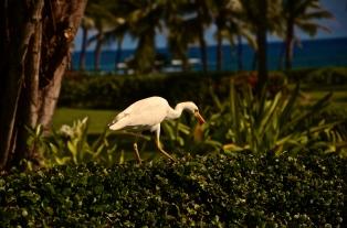 Bird Spotting on Kauai, Hawaii